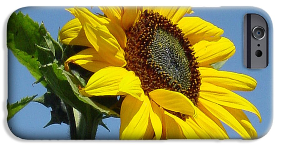 Sunflower IPhone 6 Case featuring the photograph Sun Goddess by Suzanne Gaff