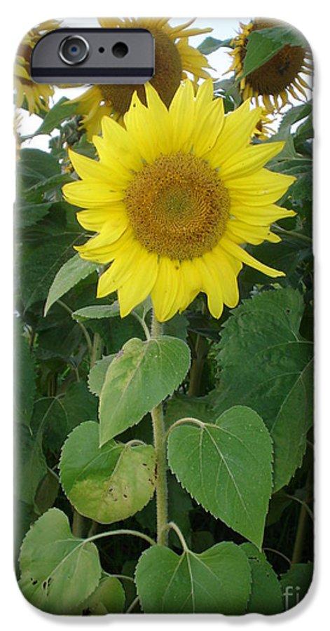 Sunflower's IPhone 6 Case featuring the photograph Sunflower Amungst Sunflower's by Chandelle Hazen
