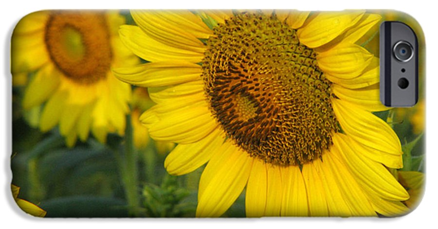 Sunflowers IPhone 6 Case featuring the photograph Sunflower Series by Amanda Barcon