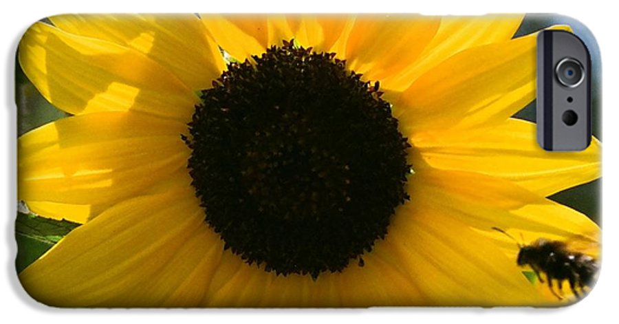 Flower IPhone 6 Case featuring the photograph Sunflower With Bee by Dean Triolo