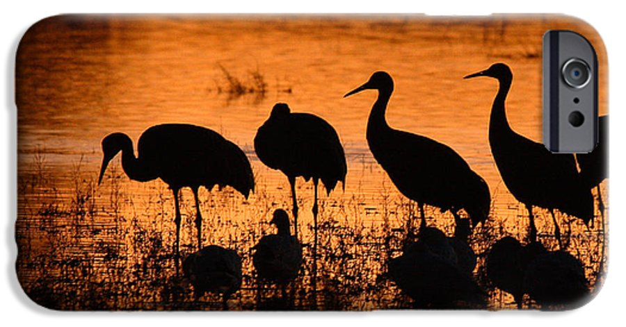 Crane IPhone 6 Case featuring the photograph Sunset Reflections Of Cranes And Geese by Max Allen