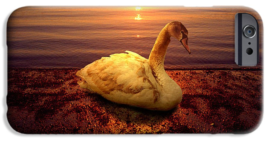 Animal IPhone 6 Case featuring the photograph Swan Lake by Yuri Lev