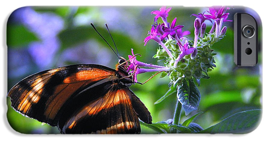 Butterfly IPhone 6 Case featuring the photograph Sweet Nector by Louise Magno