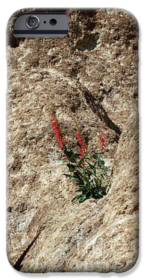 Wildflowers; Flowers IPhone 6 Case featuring the photograph Tenacity by Kathy McClure