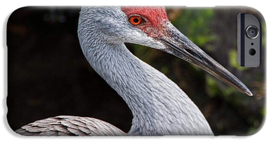 Bird IPhone 6 Case featuring the photograph The Greater Sandhill Crane by Christopher Holmes