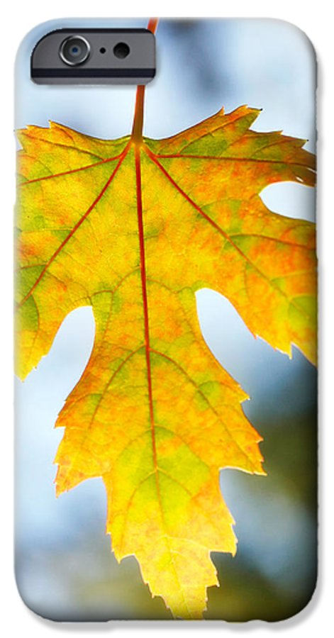 Maple IPhone 6 Case featuring the photograph The Maple Leaf by Marilyn Hunt