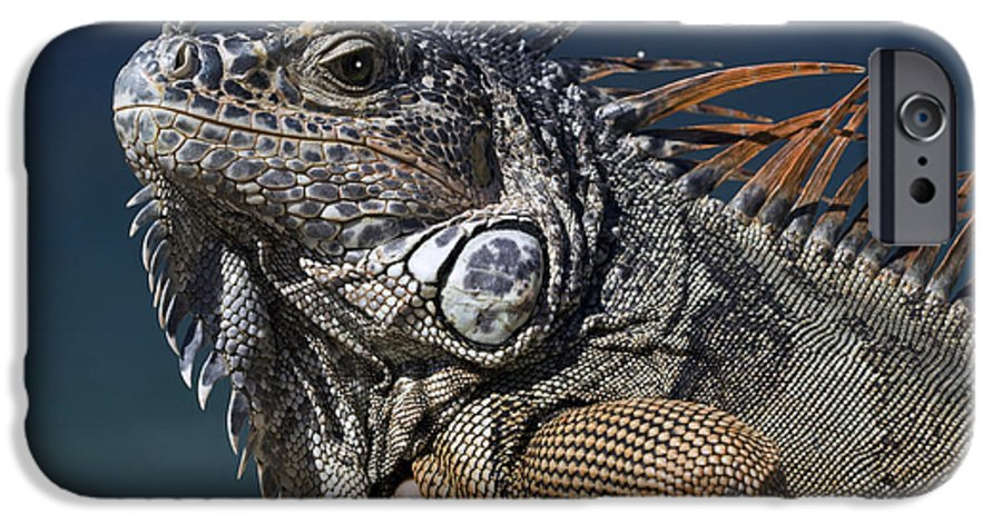 Animal IPhone 6 Case featuring the photograph The Night Of The Iguana by Carl Purcell