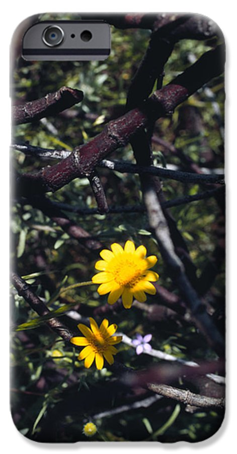Flower IPhone 6 Case featuring the photograph The Prisoner by Randy Oberg
