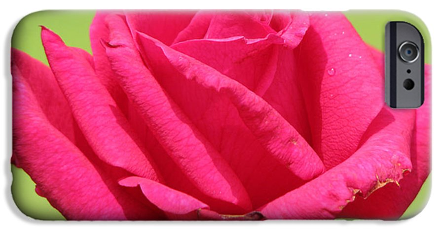 Roses IPhone 6 Case featuring the photograph The Rose by Amanda Barcon