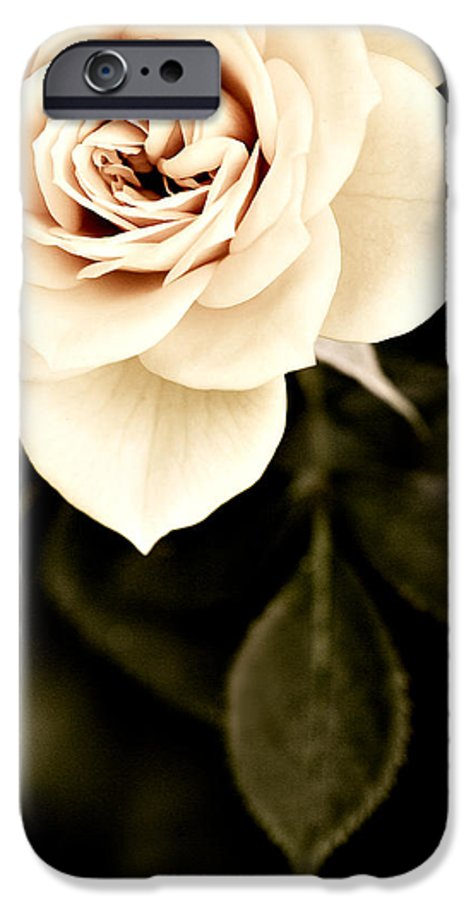 Rose IPhone 6 Case featuring the photograph The Softest Rose by Marilyn Hunt