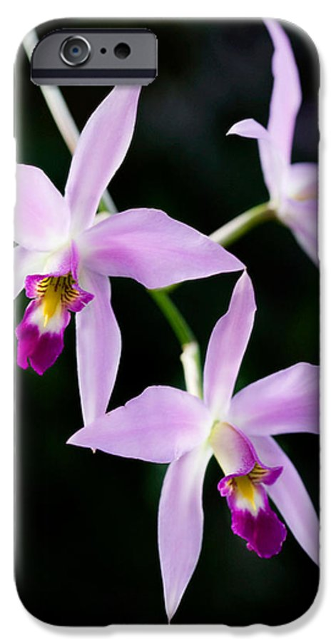Orchid IPhone 6 Case featuring the photograph Three Orchids by Marilyn Hunt