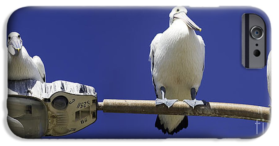 Australian White Pelicans IPhone 6 Case featuring the photograph Three Pelicans On A Lamp Post by Avalon Fine Art Photography