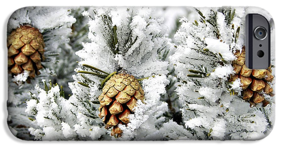 Frosty IPhone 6 Case featuring the photograph Three Pinecones by Marilyn Hunt
