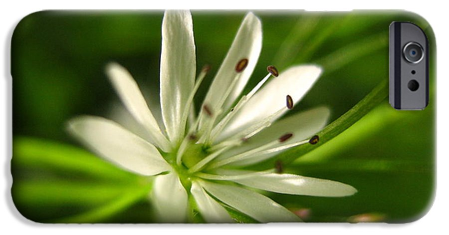 Tiny White Flower IPhone 6 Case featuring the photograph Tiny White Flower by Melissa Parks