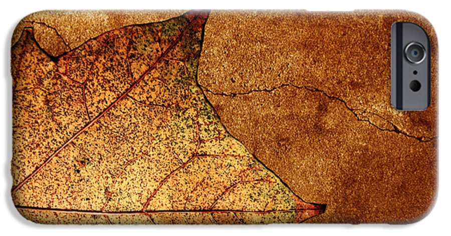 Autumn IPhone 6 Case featuring the photograph Today Everything Changes by Dana DiPasquale