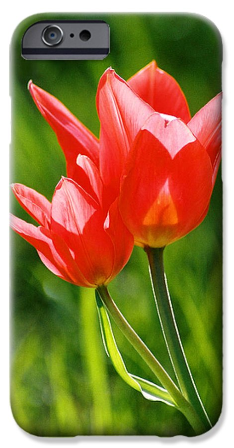 Flowers IPhone 6 Case featuring the photograph Toronto Tulip by Steve Karol