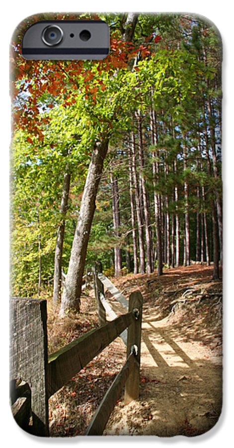 Tree IPhone 6 Case featuring the photograph Tree Trail by Margie Wildblood