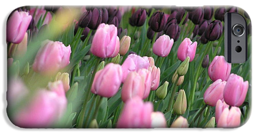 Tulips IPhone 6 Case featuring the photograph Tulip Dreams by Louise Magno
