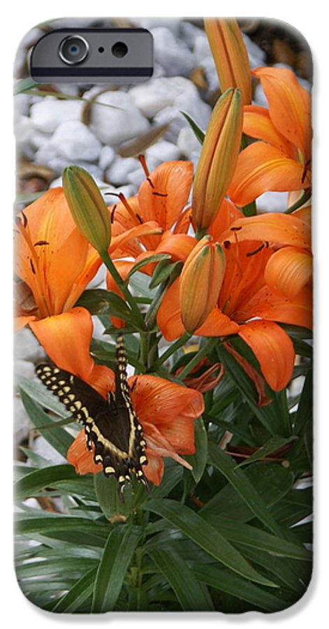 Flower IPhone 6 Case featuring the photograph Untitled by Debbie May