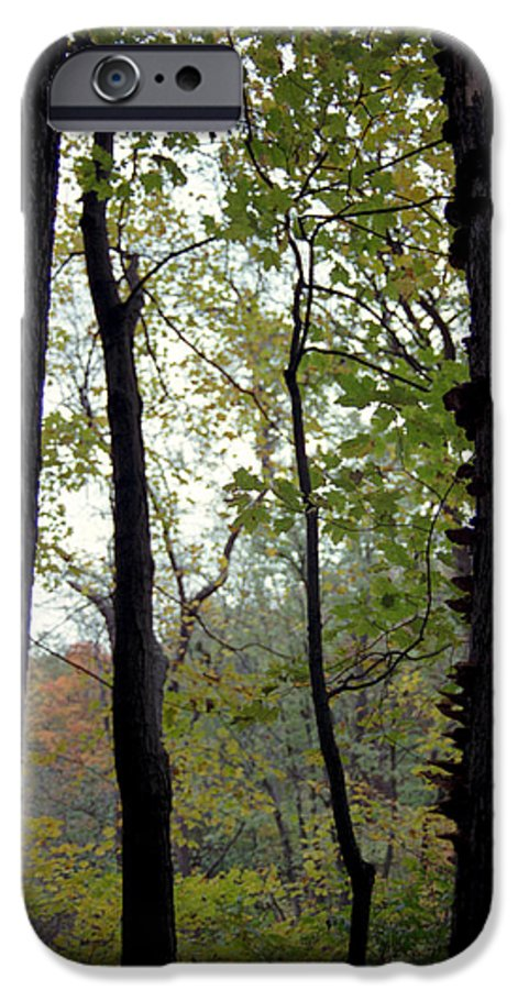 Tree IPhone 6 Case featuring the photograph Vertical Limits by Randy Oberg