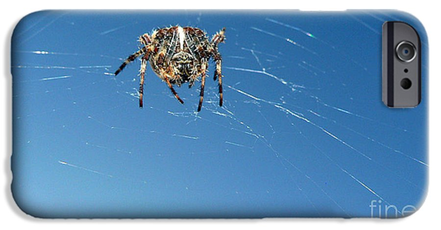 Spider IPhone 6 Case featuring the photograph Waiting by Larry Keahey