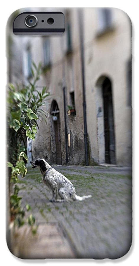 Dog IPhone 6 Case featuring the photograph Waiting by Marilyn Hunt