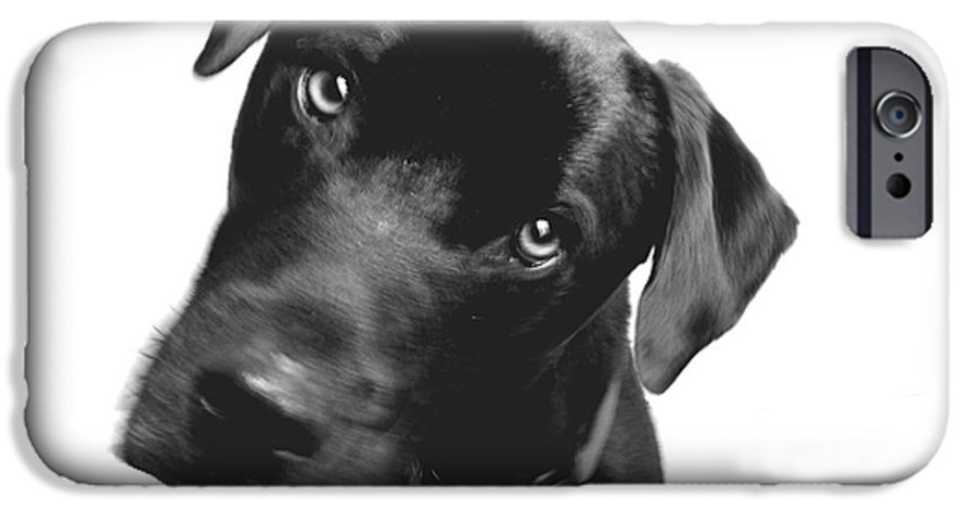 Labrador IPhone 6 Case featuring the photograph What by Amanda Barcon