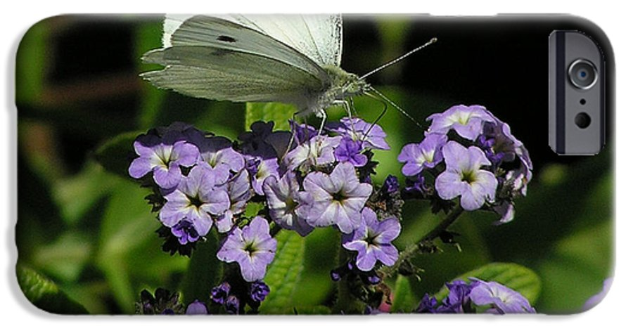 White IPhone 6 Case featuring the photograph White Butterfly by Louise Magno