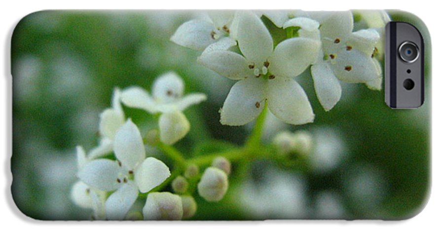 Flower IPhone 6 Case featuring the photograph White Floral Cluster by Melissa Parks