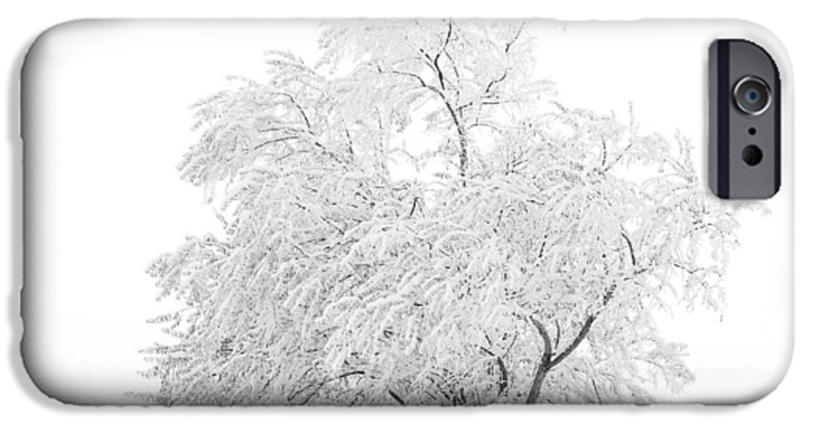Snow IPhone 6 Case featuring the photograph White On White by Marilyn Hunt