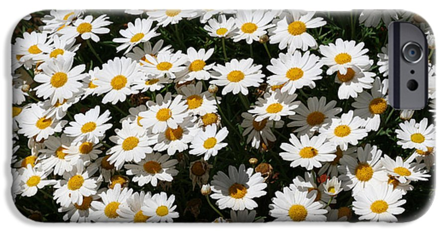 White IPhone 6 Case featuring the photograph White Summer Daisies by Christine Till