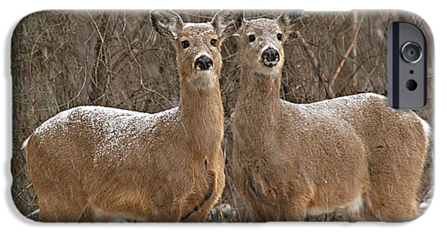 Deer IPhone 6 Case featuring the photograph White-tailed Deer Pair Peering Out From Snowstorm by Max Allen