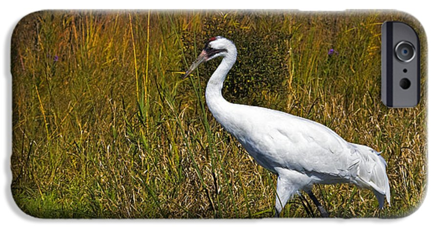 whooping Crane IPhone 6 Case featuring the photograph Whooping Crane by Al Mueller