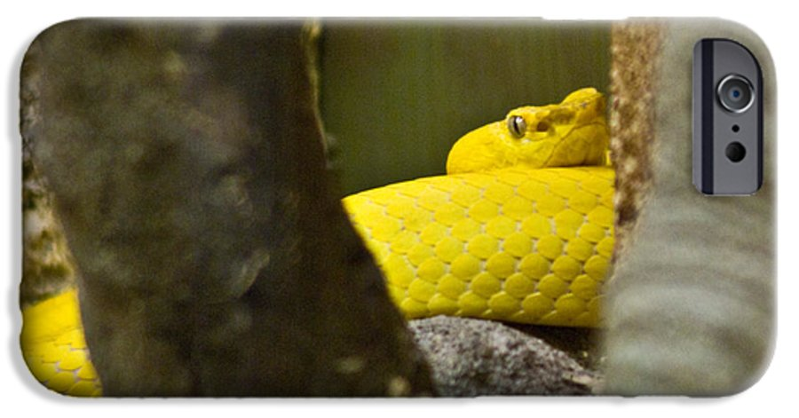 Yellow IPhone 6 Case featuring the photograph Wicked Snake by Douglas Barnett