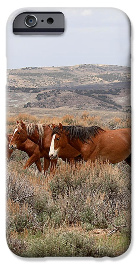 Horse IPhone 6 Case featuring the photograph Wild Horse Trio by Max Allen