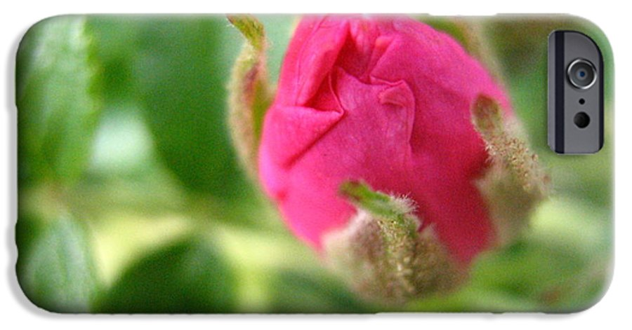 Rose IPhone 6 Case featuring the photograph Wild Rose Bud by Melissa Parks