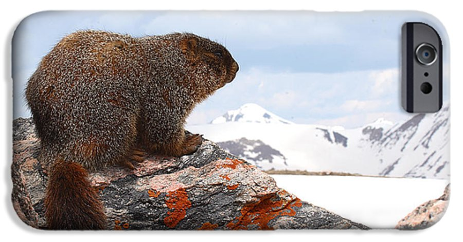 Marmot IPhone 6 Case featuring the photograph Yellow-bellied Marmot Enjoying The Mountain View by Max Allen
