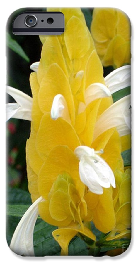 Flower IPhone 6 Case featuring the photograph Yellow Eruption by Shelley Jones