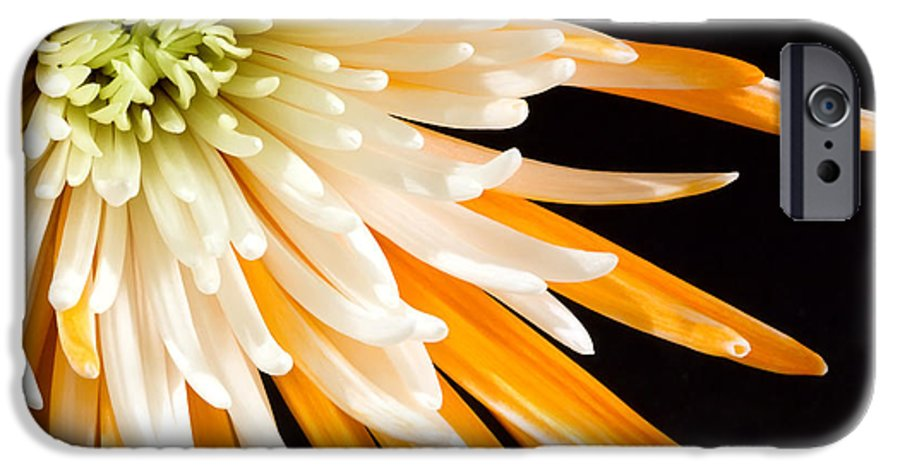 Flower IPhone 6 Case featuring the photograph Yellow Flower On Black by Al Mueller