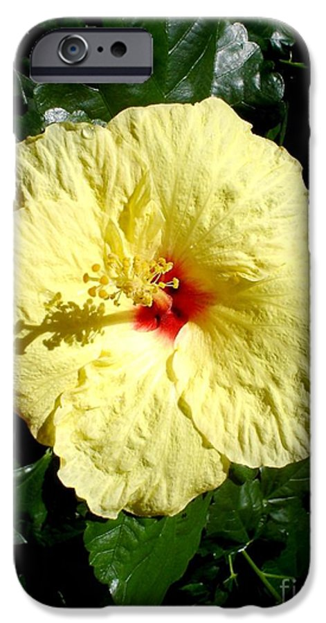 Flower IPhone 6 Case featuring the photograph Yellow Hibiscus The Hawaiian State Flower by Chandelle Hazen