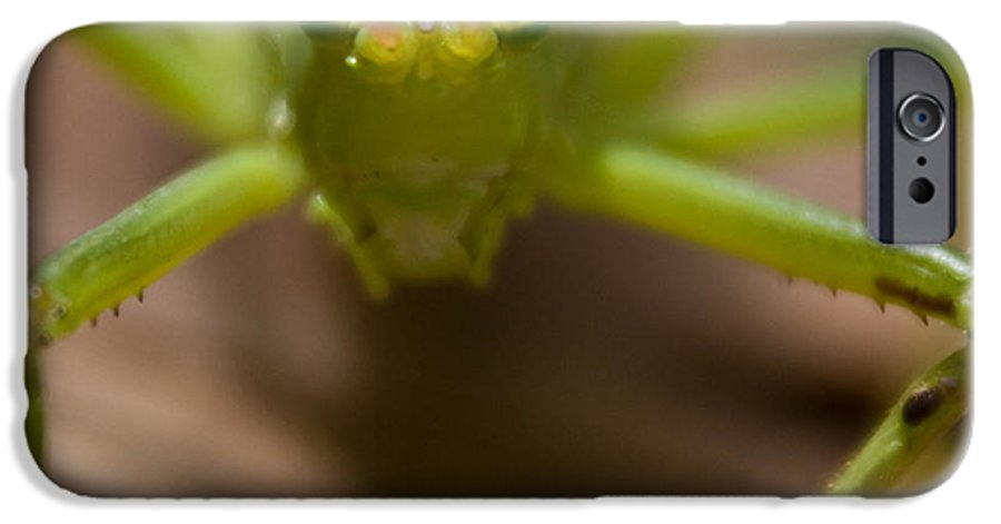 Katydid IPhone 6 Case featuring the photograph You Said What by Douglas Barnett