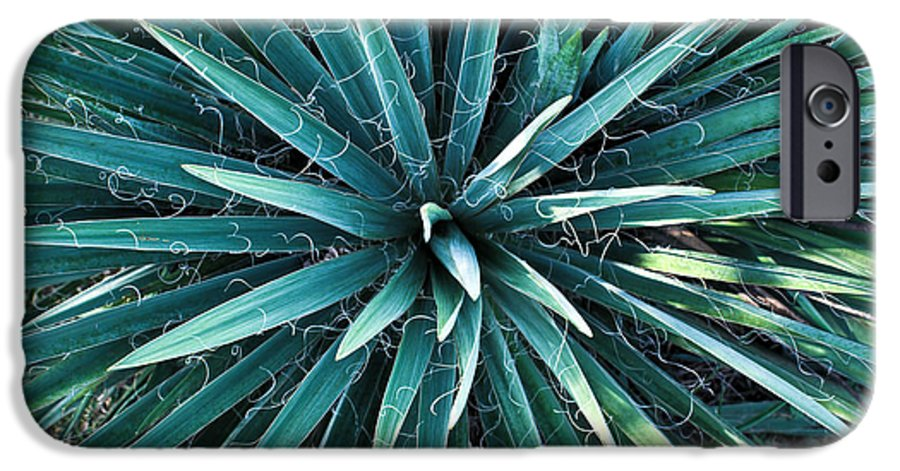 Yucca IPhone 6 Case featuring the photograph Yucca Plant Detail by Douglas Barnett