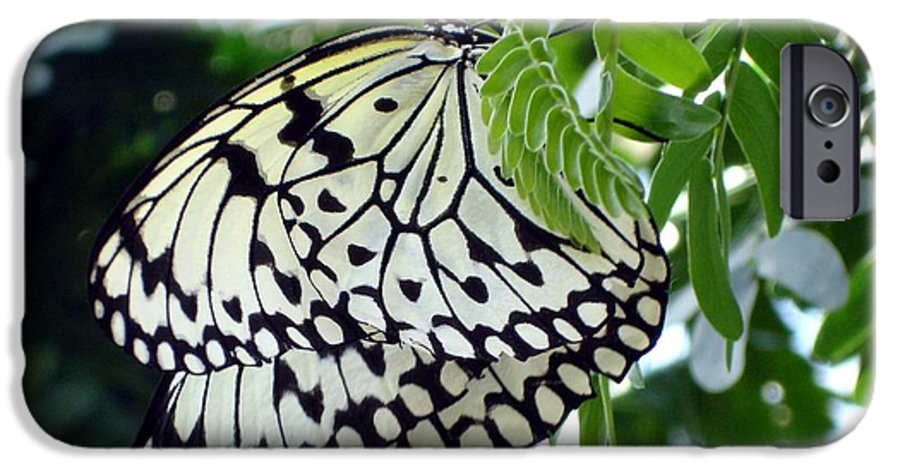 Butterfly IPhone 6 Case featuring the photograph Zebra In Disguise by Shelley Jones
