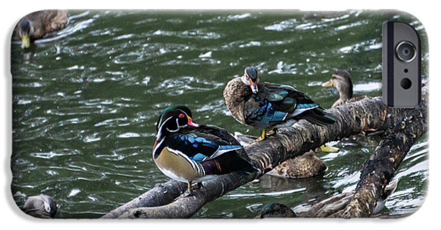 Duck IPhone 6 Case featuring the photograph Resting Ducks by Rob Olivo