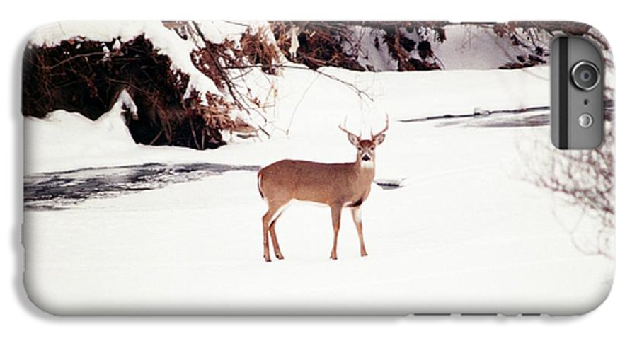Whitetail Deer IPhone 6 Plus Case featuring the photograph 080706-89 by Mike Davis