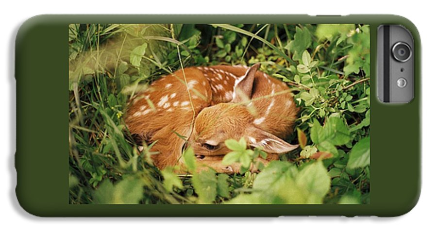 Deer IPhone 6 Plus Case featuring the photograph 080806-17 by Mike Davis