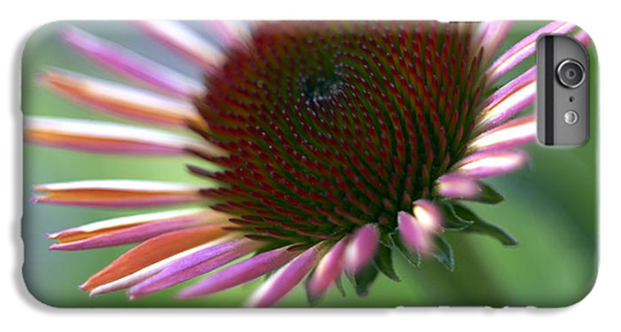 Genus Echinacea IPhone 6 Plus Case featuring the photograph Coneflower by Tony Cordoza