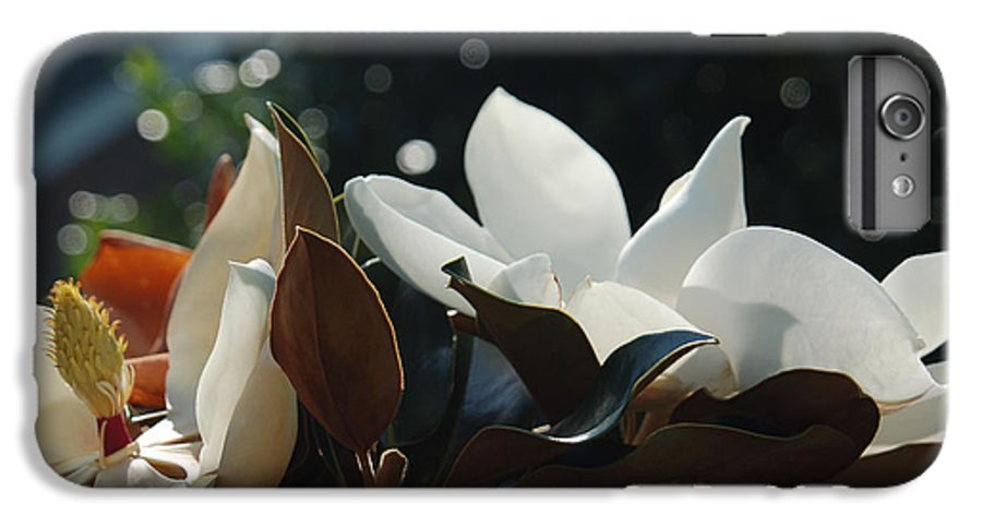 Magnolia IPhone 6 Plus Case featuring the photograph A Sea Of Magnolias by Suzanne Gaff