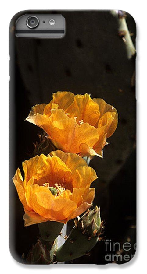Cactus IPhone 6 Plus Case featuring the photograph Apricot Blossoms by Kathy McClure