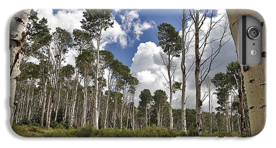 3scape IPhone 6 Plus Case featuring the photograph Aspen Grove by Adam Romanowicz